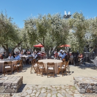 Colavita Olive Grove Terrace and Outdoor Kitchen