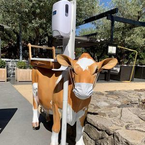 Cow with face mask hand sanitizer station at the Grove restaurant in Napa.